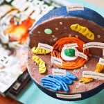 Science Project   3D Animal Cell