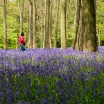 Visiting Ashridge Estate