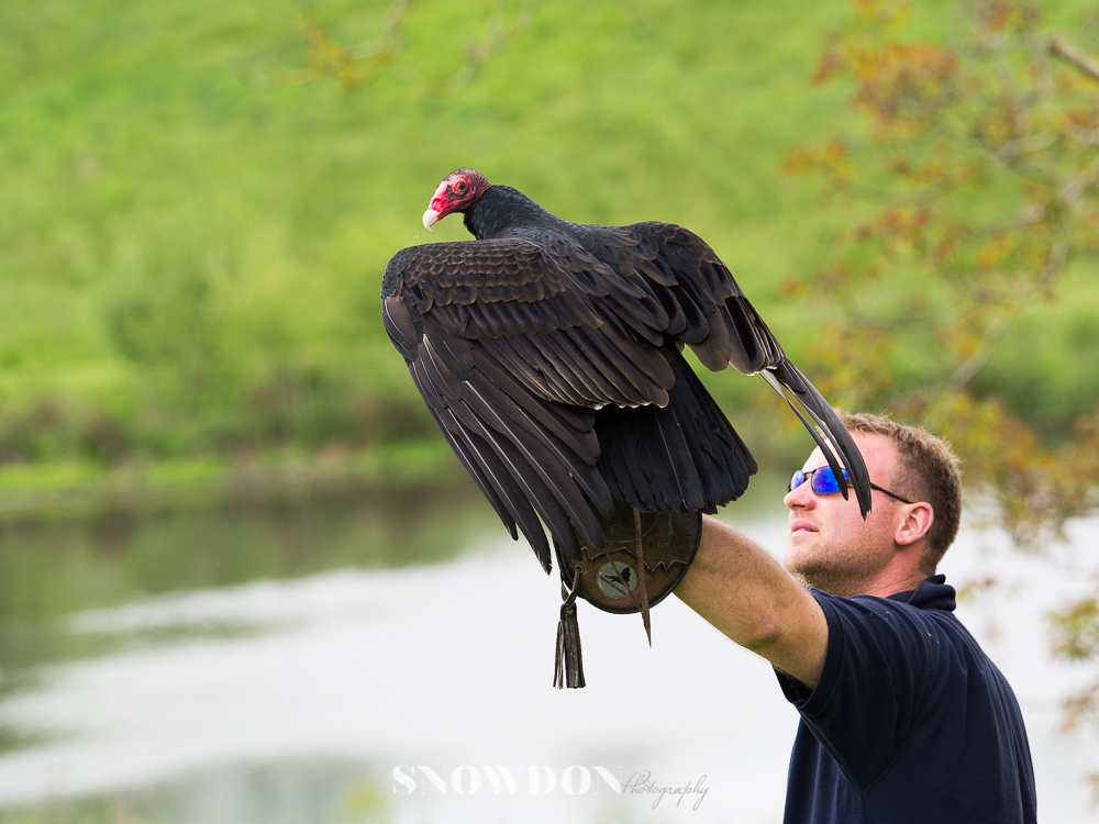 Birds of prey at Leeds Castle, Photography by Ghene Snowdon