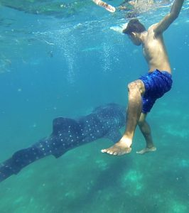 Swimming with the whalesharks in the Philippines